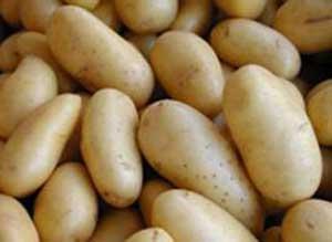 Kartofun qiyməti qalxdı