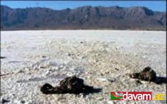 Urmu gölünün flaminqoları Bakıya köçür