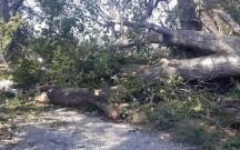 Başına ağac düşdü, öldü