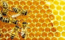 """Arıların """"naviqasiya sistemi"""" olduğu müəyyənləşib"""