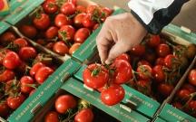 Rusiyanın 33 ton pomidoru Azərbaycana qaytarmasının səbəbi