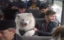 Bakıda avtobusa it mindirdilər