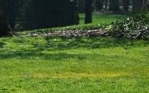 Prezidentə hədiyyə gətirdiyi ağaclar oğurlandı