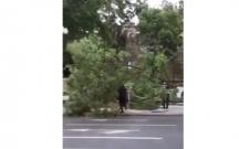 Bakıda güclü külək ağacı aşırdı