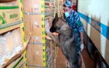 """Ukraynaya aparılan """"yemiş""""lərin altından 545 kq narkotik tapıldı"""