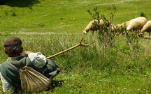 Füzulidə çoban öz qoyunlarını oğurladı