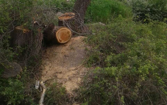 Qanunsuz kəsilən ağaclar sexdə aşkarlandı