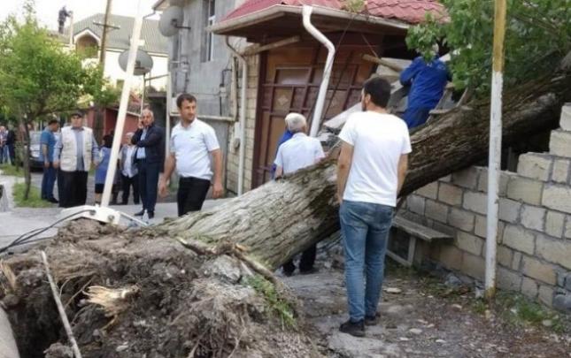 Güclü külək iri gövdəli ağacı evin üzərinə aşırdı