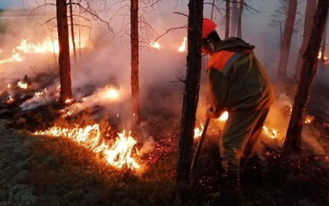 Suraxanıda 50 şam ağacı yandı