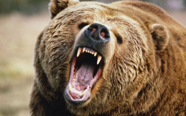 Ermənistanda turisti ayı parçaladı