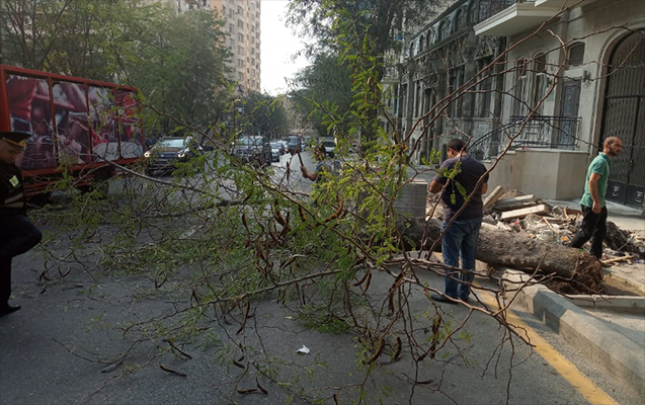 Güclü külək Bakıda 6 ağacı aşırdı