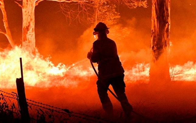 Avstraliya meşələrinin 20%-i kül olub