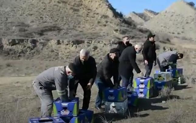 250 baş qırqovul vəhşi təbiətə buraxılıb
