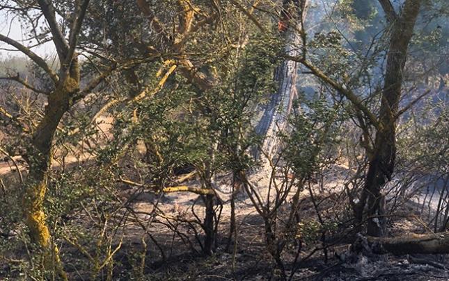 Nabranda yanğının söndürülməsinə helikopter cəlb edildi