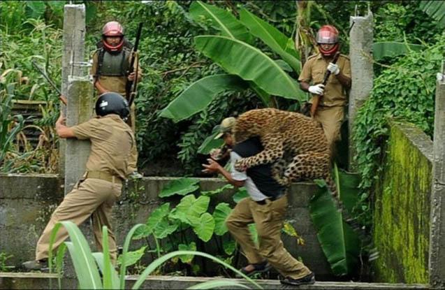 Leopard kənddə insanlara hücum edib