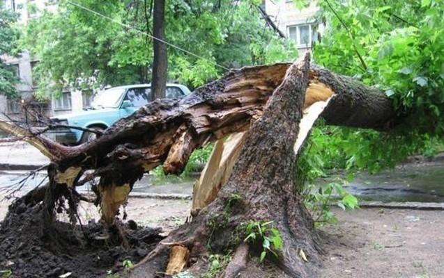 Nazirlik ağac budaqları kəsən şəxsi cərimələdi