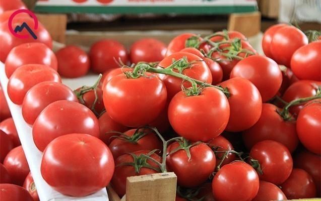 Rusiya 33 ton pomidoru Azərbaycana qaytardı