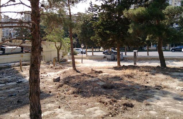 Bakıda ağacların qanunsuz kəsilməsi faktı aşkarlanıb