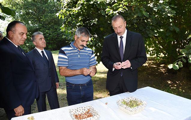Prezident fındıq bağında olub - Fotolar