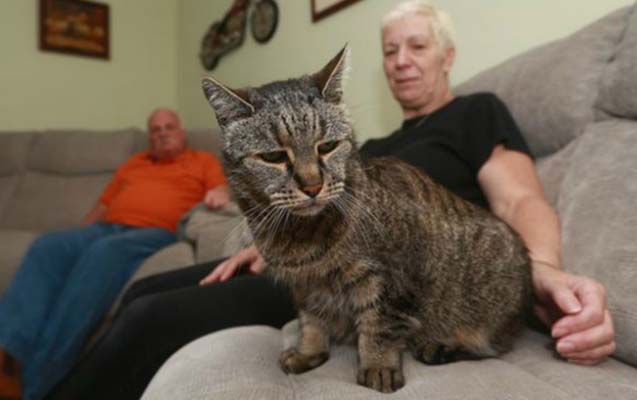Dünyanın ən yaşlı pişiyi öldü