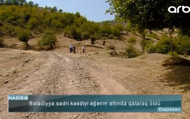 Azərbaycanda bələdiyyə sədri kəsdiyi ağacın altında qalıb öldü