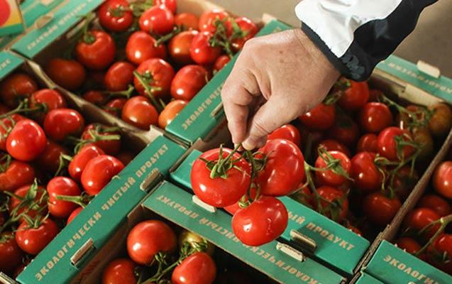 Rusiya Ermənistandan idxal olunan pomidora qadağa qoya bilər