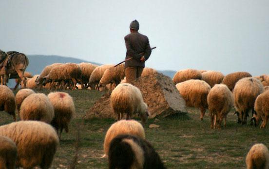 Azərbaycanda çobanlar arasında dava