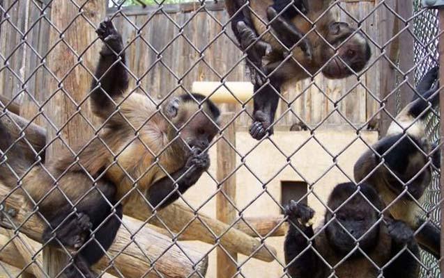 Bakı zooparkında meymun qəfəsində kombi quraşdırıldı