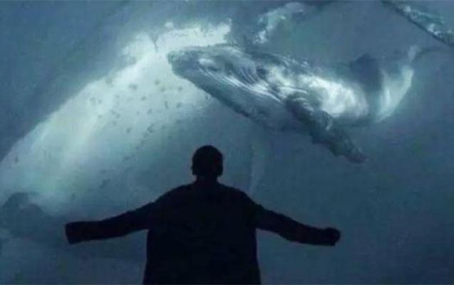 """Hövsanda uşaqlar qollarını niyə kəsib? - """"Mavi balina"""" izi"""