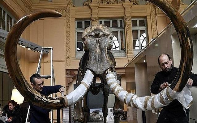 10 min illik mamont skeleti yarım milyona satıldı