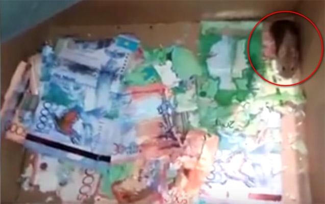 Astanada siçanlar bankomata soxularaq pulları yeyiblər - Video