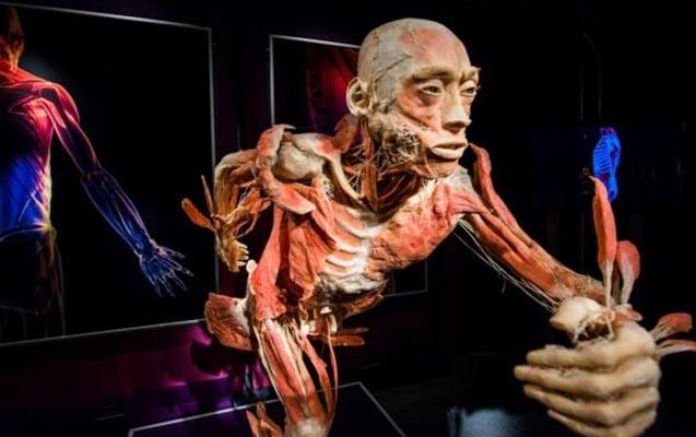 Azərbaycanda Anatomiya Muzeyi yaradıldı