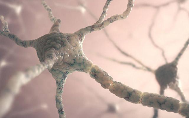 Bioloqlar ilk dəfə yeni beyin hüceyrəsinin yaranmasını görə biliblər
