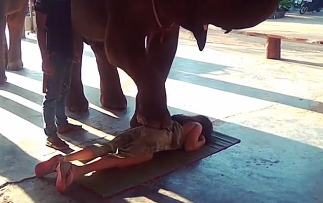 Fillər Vüsaləni masaj etdi