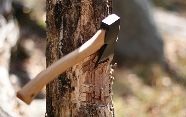 Lerikdə 75 ağacın kəsilməsinə görə cinayət işi başlanılıb