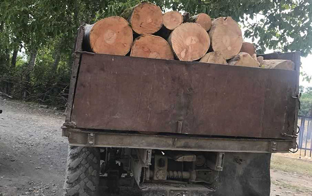 Meşədən ağac kəsənlər saxlanıldı