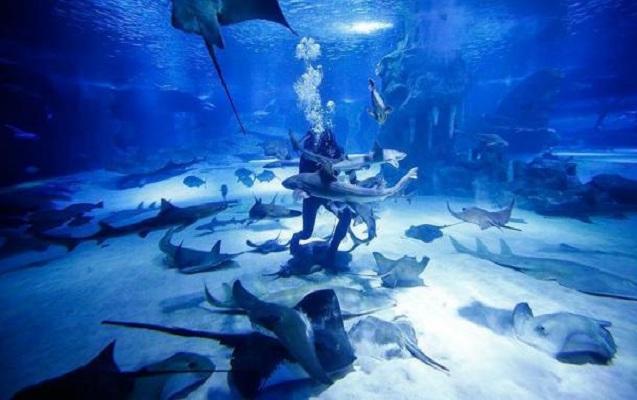 Yeni köpək balığı növü kəşf edildi