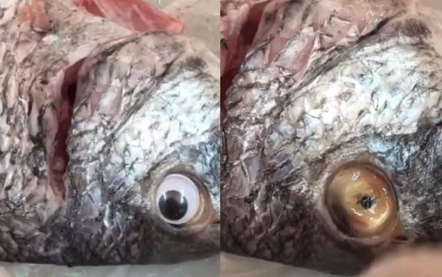 Balığa saxta göz taxdılar