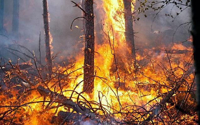 Beyləqanda 196 ədəd ağac yandırıldı