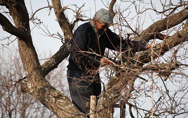 5 ağac kəsdi, təbiətə 15 min manat ziyan vurdu