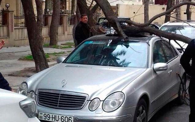 Avtomobilləri ağacların altında park etməyin