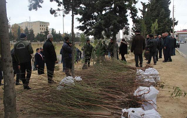Nizamidə ağacəkmə kampaniyası keçirildi