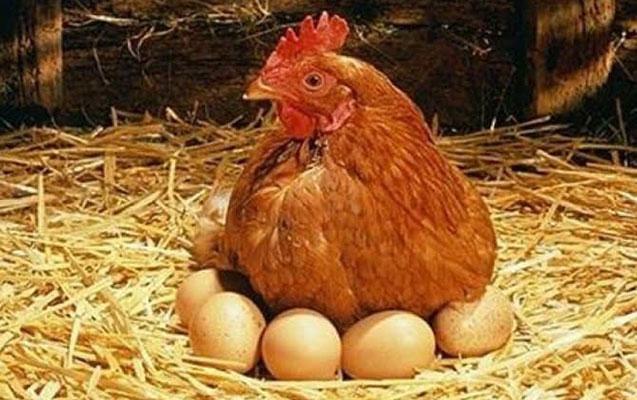 Bakıda yumurta niyə limitlə satılır?