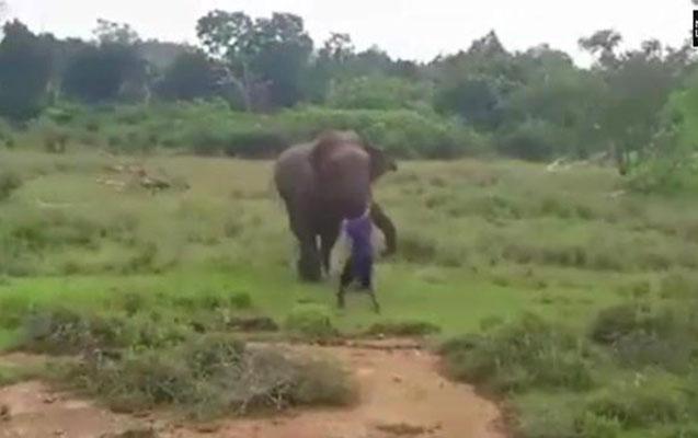 Fil onu hipnoz etmək istəyən kişini əzdi