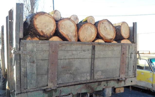 Qanunsuz ağac kəsənlər saxlanıldı