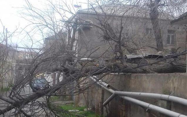 Bakıda güclü külək 40-a yaxın ağacı aşırıb