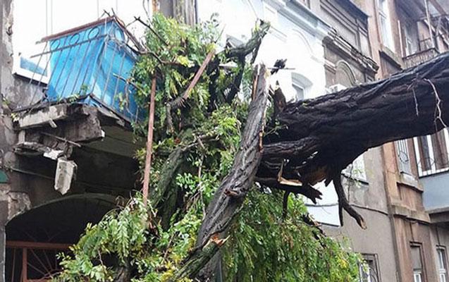 Bakıda sınan ağaclar binaların balkonuna düşür