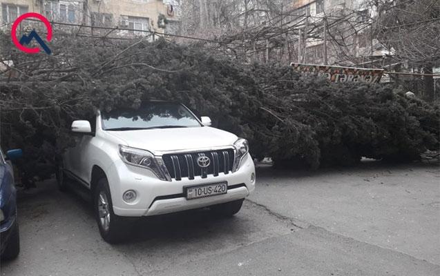 """Bakıda ağac """"Prado"""" və """"BMW""""nin üstünə aşdı"""