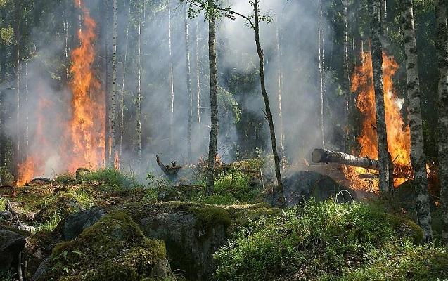 Manqal qalayarkən meşəni yandırmışdılar