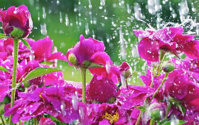 Sabah intensiv yağış yağacaq